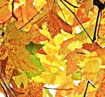 autumn-1655915_640