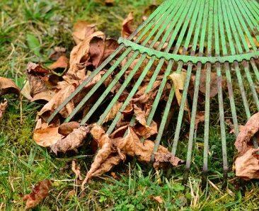 leaves-2901684_640